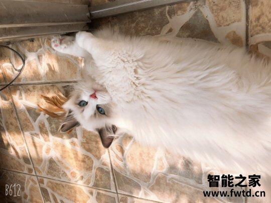orijen渴望猫粮怎么样?猫咪吃了渴望猫粮越来越漂亮?
